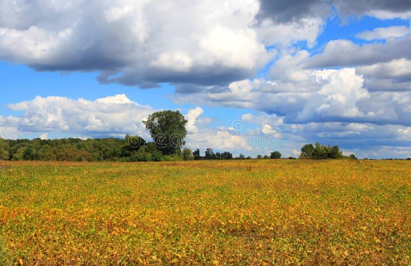 Gospodarstwo rolne w jesień czas obraz royalty free