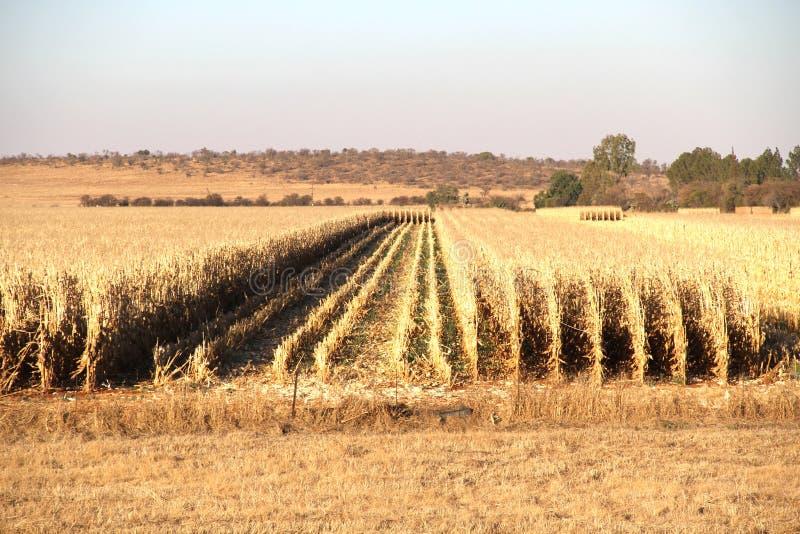 Gospodarstwo rolne w Potchefstroom, Południowa Afryka zdjęcie royalty free