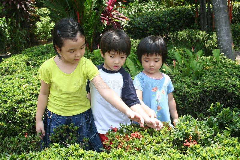 Gosses au jardin photos stock