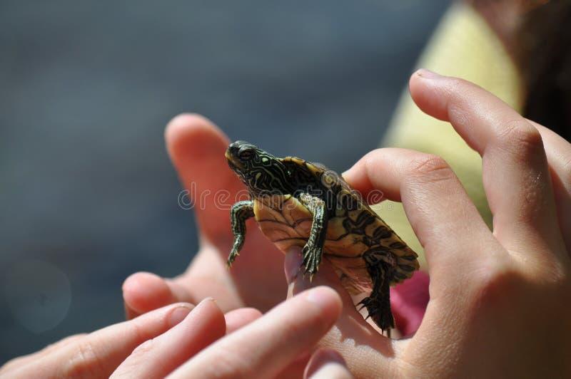 Gosses retenant une tortue images stock