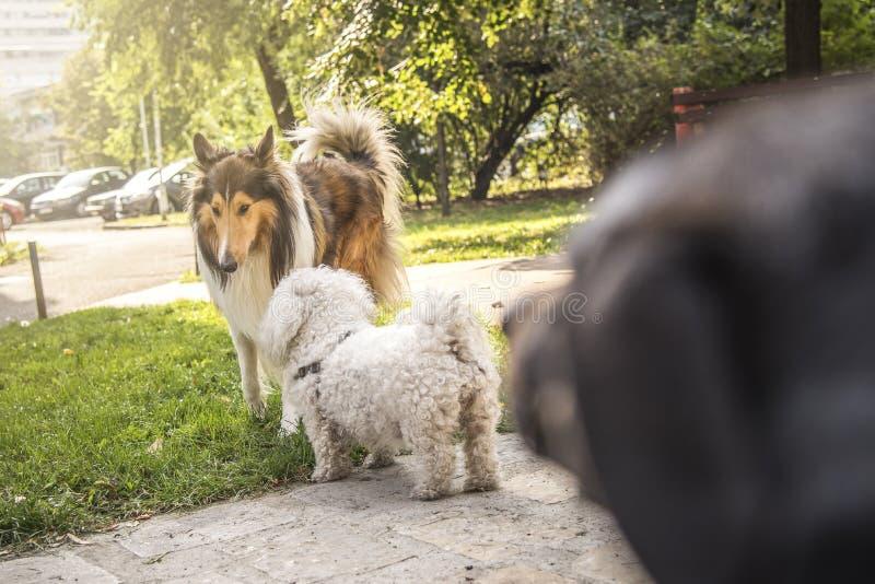 Gossip del cucciolo fotografia stock libera da diritti