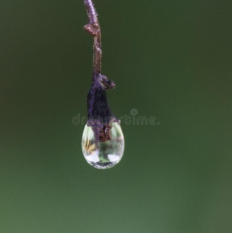 Gota congelada da água fotografia de stock