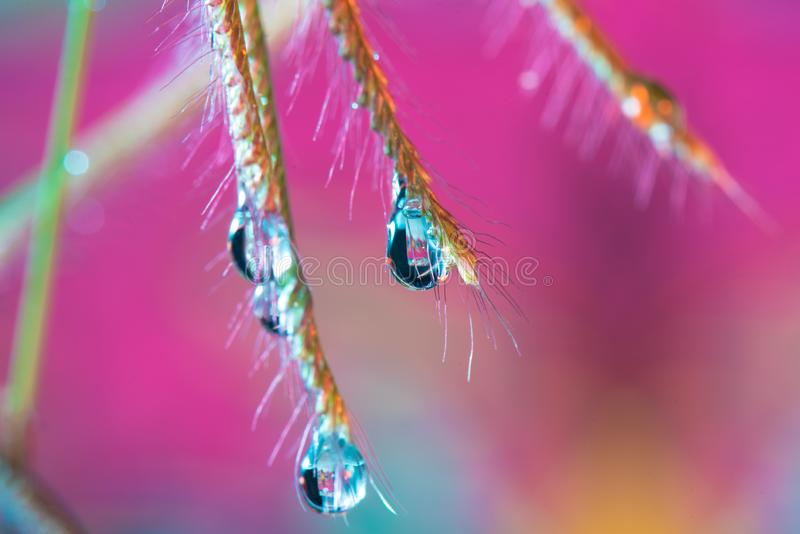 Gota da água da grama no macro fotografia de stock royalty free