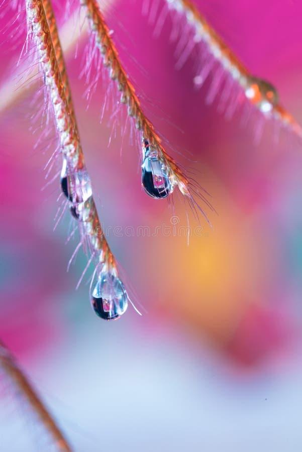 Gota da água da grama no macro fotos de stock
