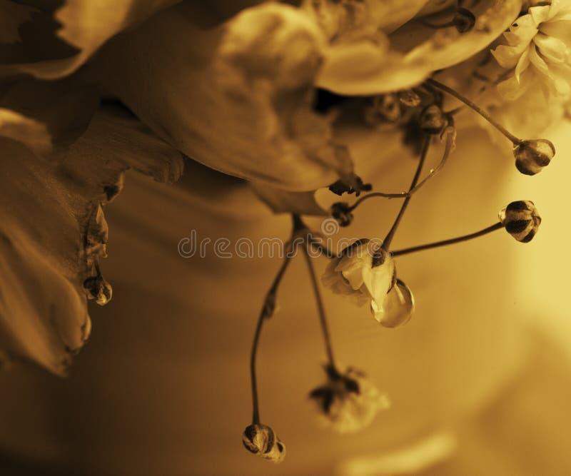Gota da água nas flores imagem de stock