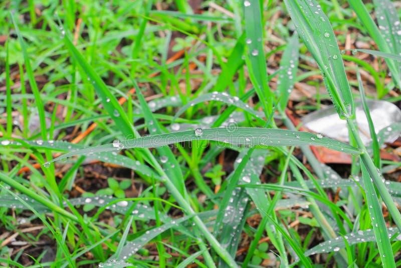 Gota da água no foco seleto do fundo bonito da grama verde das folhas com profundidade de campo rasa imagem de stock royalty free