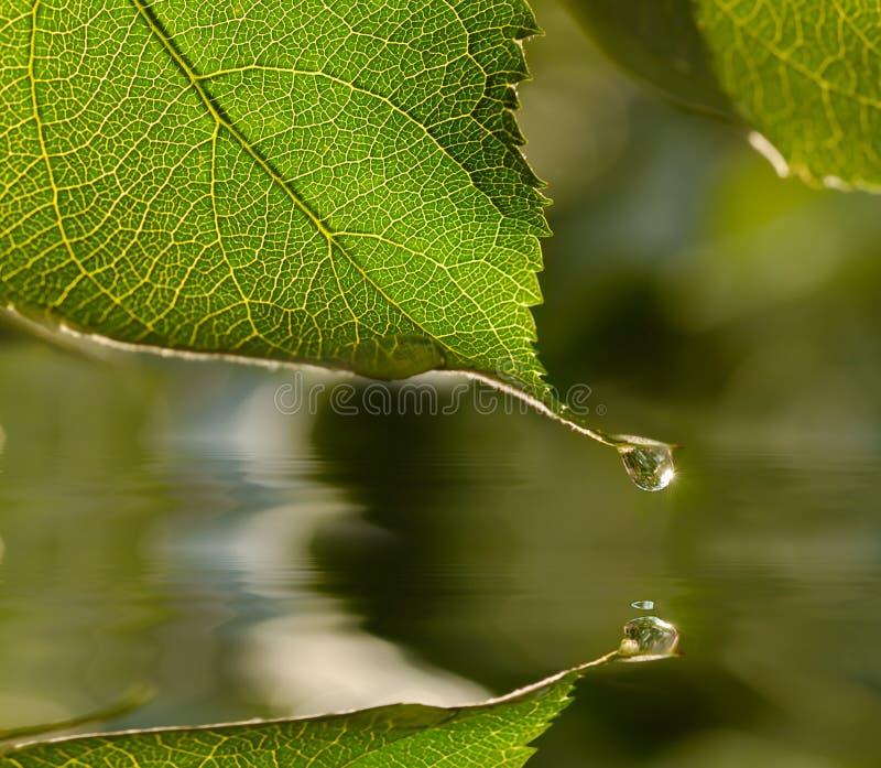 Gota de agua en la hoja imagen de archivo