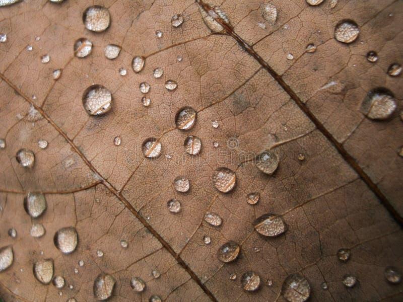 Gota de agua en la hoja seca imágenes de archivo libres de regalías