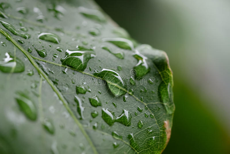 Gota de agua en la hoja verde imagenes de archivo