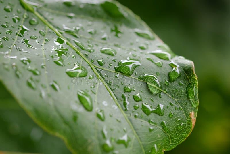 Gota de agua en la hoja verde fotos de archivo