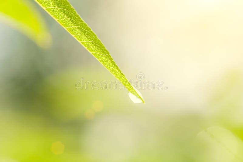 Gota de agua de la licencia vith del verde de Uoyng en fondo verde claro de la naturaleza fotografía de archivo libre de regalías