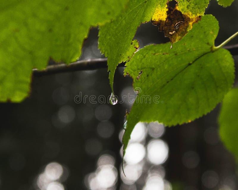 Gota de lluvia en las extremidades de los bosques imagenes de archivo