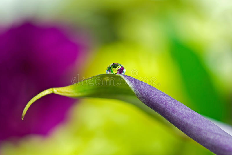 Gota de orvalho floral foto de stock