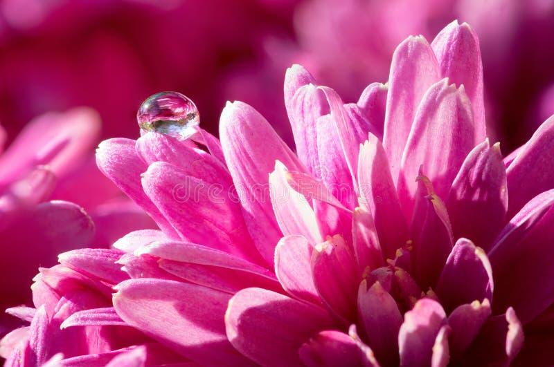 Gota de orvalho na flor imagens de stock