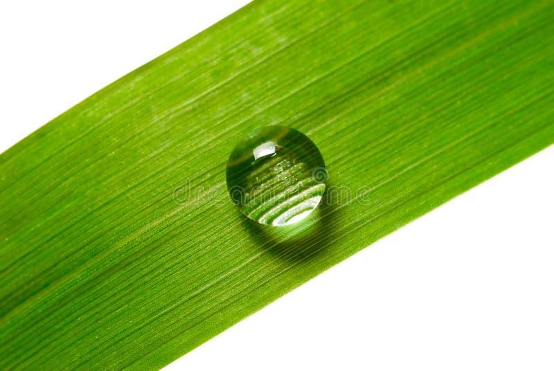 Gota del agua en hierba fotografía de archivo