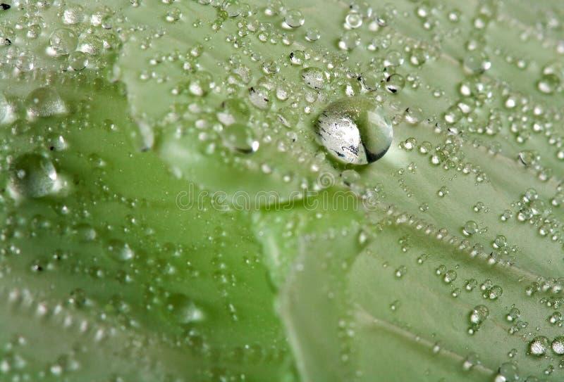 Gota del agua en la hoja fotografía de archivo