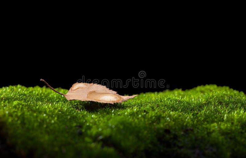 Gota inoperante da folha e da chuva imagens de stock
