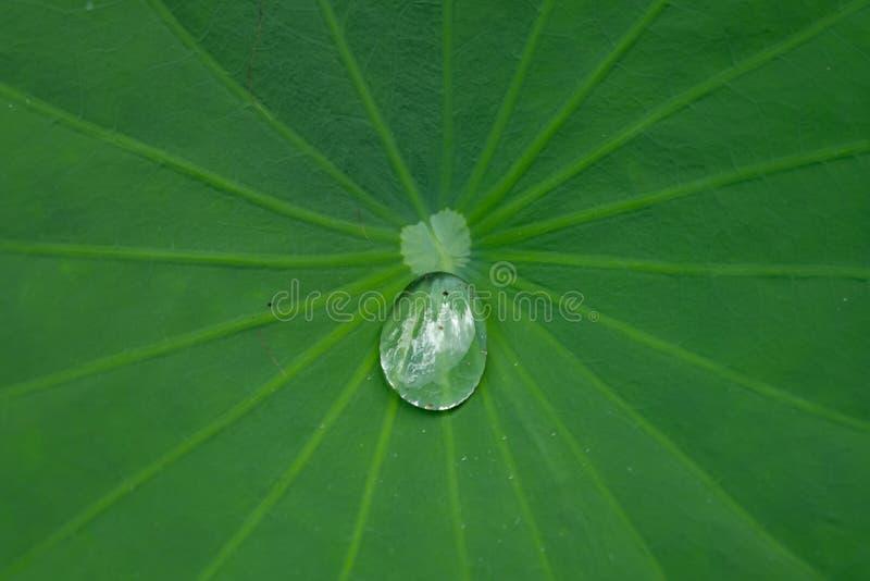 Gota na folha de Lotus fotos de stock royalty free