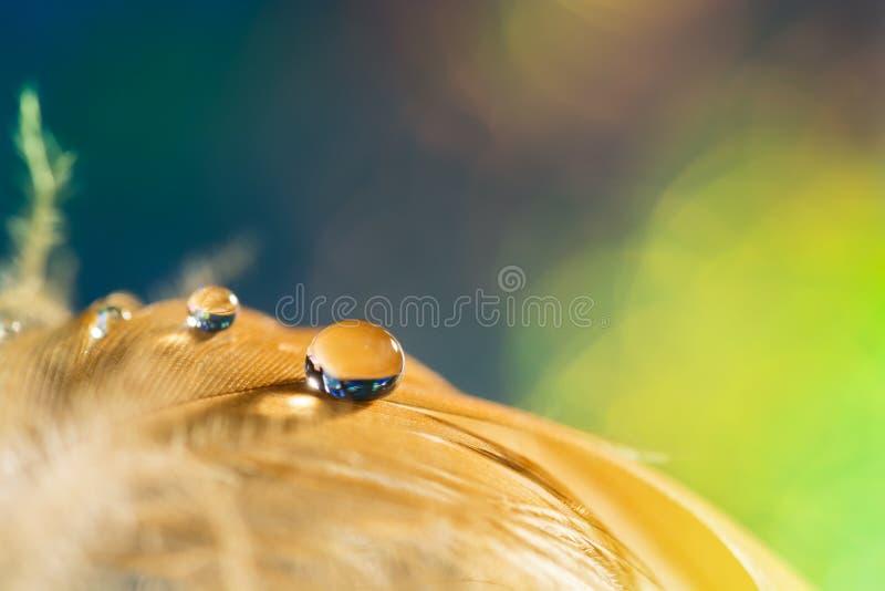 Gota na torta do ` s do pássaro Pena dourada com uma gota em um fundo verde fotografia de stock