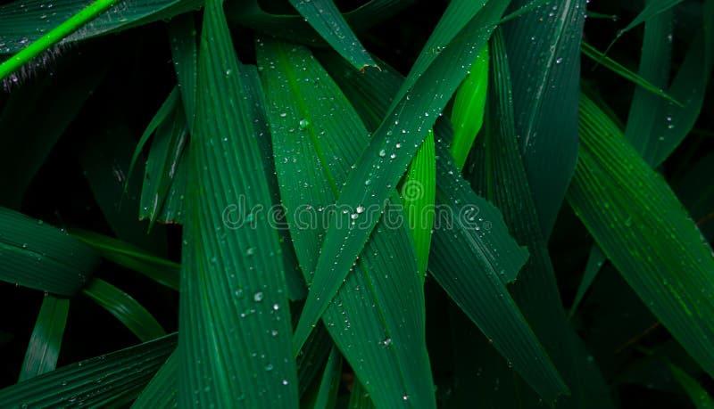 Gotas bonitas da água nas folhas verdes frescas após a chuva imagem de stock royalty free