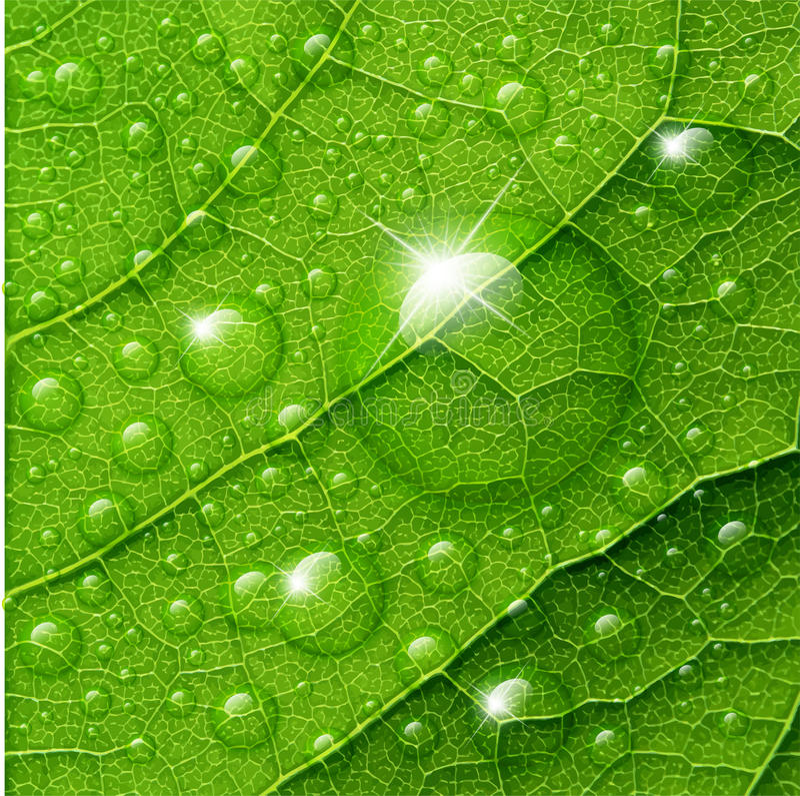 Gotas da água do vetor na folha verde ilustração do vetor