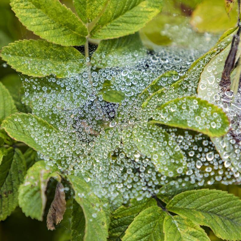 Gotas da água em uma rede da aranha imagens de stock royalty free