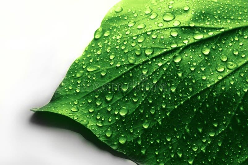 Gotas da água na folha da planta verde fotos de stock royalty free