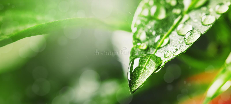 Gotas da água na folha verde sob a chuva, tiro macro, espaço para o texto fotos de stock