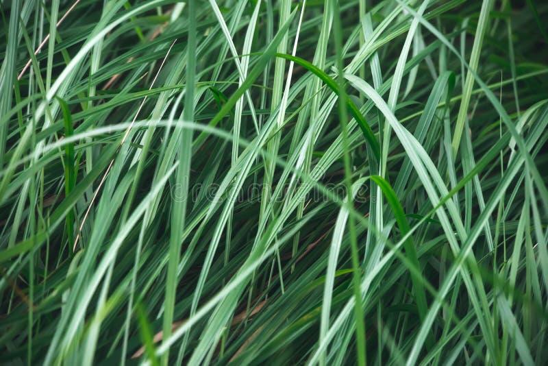 Gotas da água na grama na natureza Macro imagem de stock
