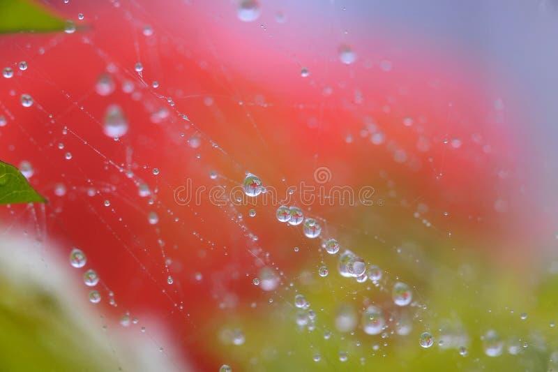 Gotas da água na rede da aranha imagens de stock royalty free
