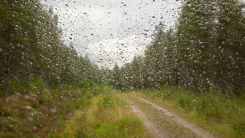 Gotas da água na superfície do vidro Vista do táxi do carro durante a chuva Estrada de floresta no valor máximo de concentração n fotografia de stock
