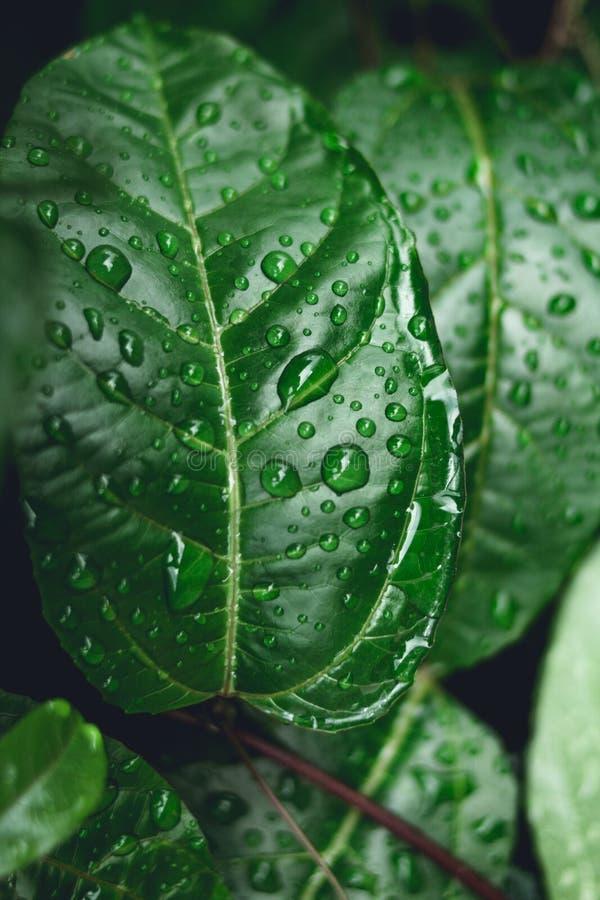 Gotas da água nas folhas na natureza fotos de stock