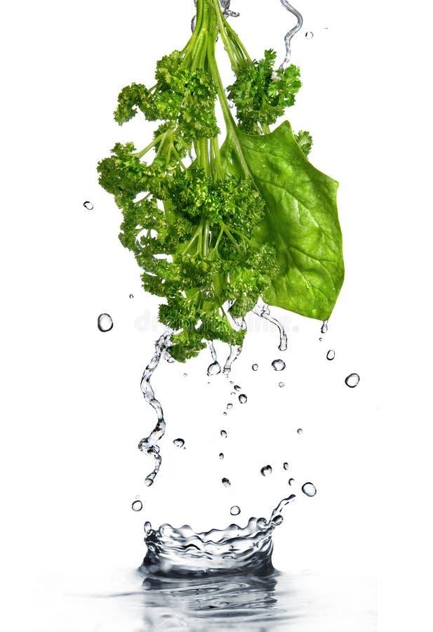 Gotas da água no espinafre e na salsa verdes foto de stock royalty free