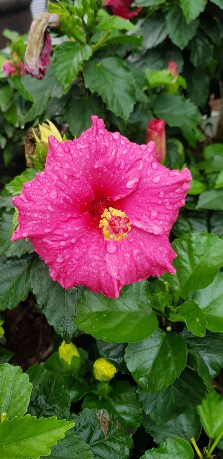 Gotas da chuva na flor foto de stock royalty free