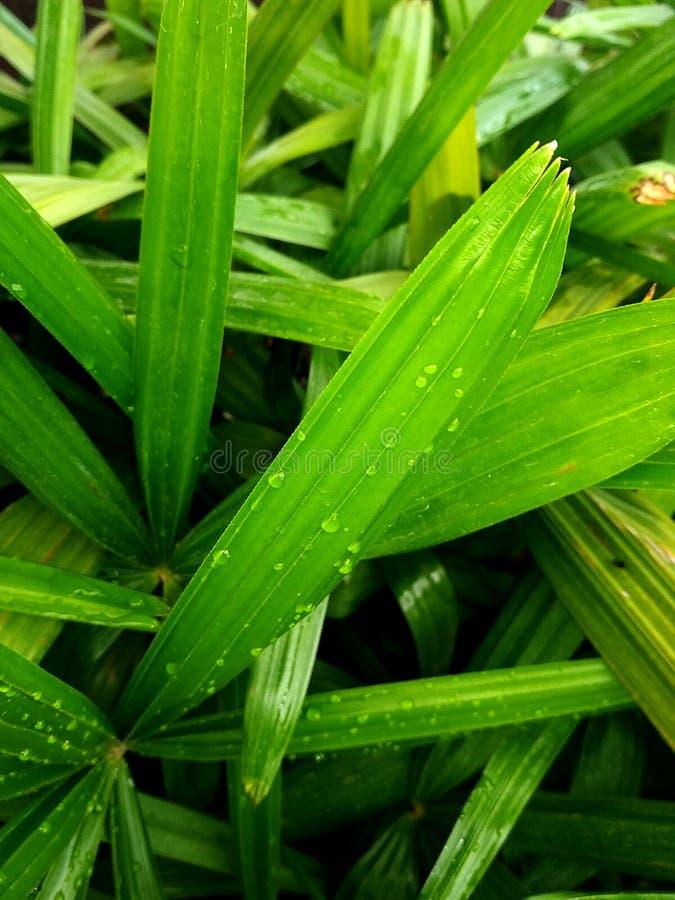 Gotas da chuva na grama verde foto de stock royalty free