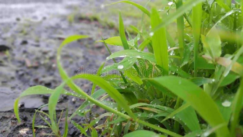 Gotas da chuva no campo de grama fotos de stock
