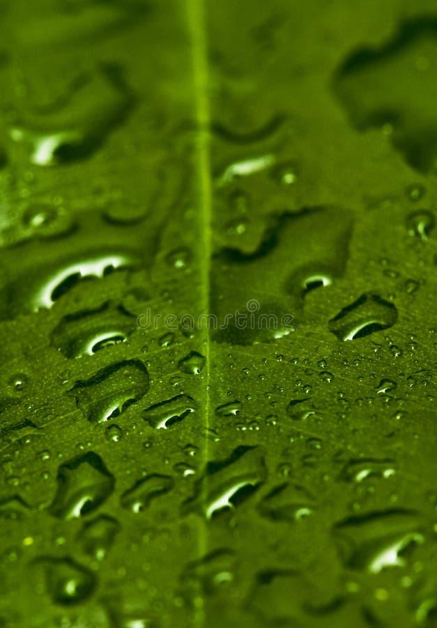 Gotas da folha e da água imagens de stock