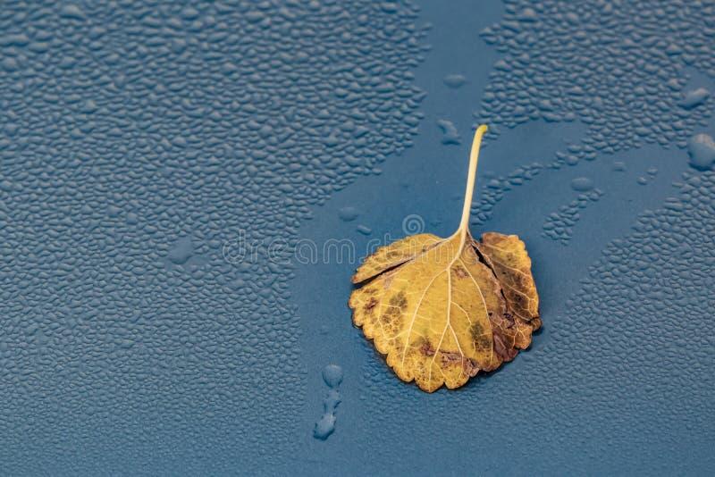 Gotas da folha e de água do outono na superfície de metal imagem de stock