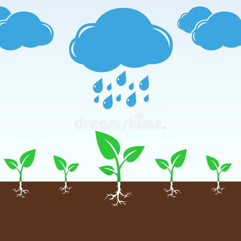 Gotas da nuvem e da chuva que caem nos brotos verdes ilustração royalty free