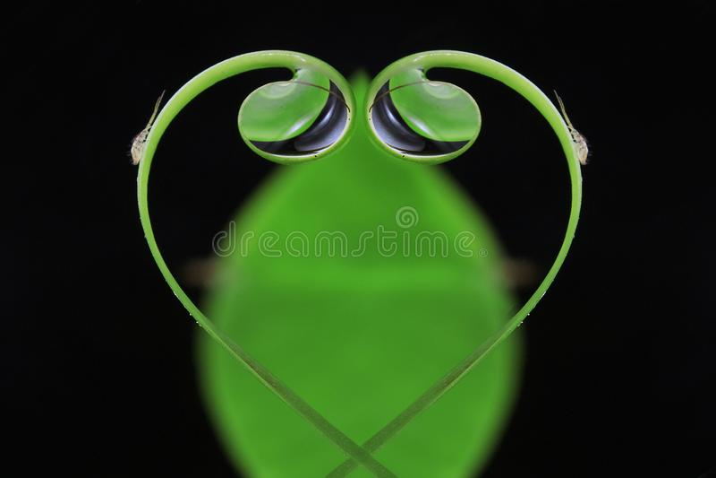 Gotas de água da folha do amor imagens de stock royalty free