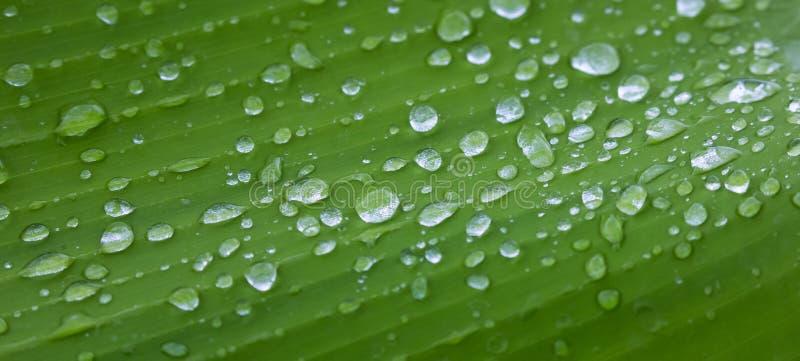 Gotas de água efervescentes da chuva na folha verde fotografia de stock