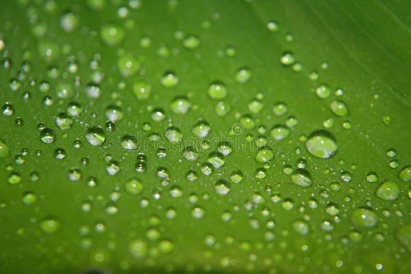 Gotas de água em uma folha fotos de stock royalty free