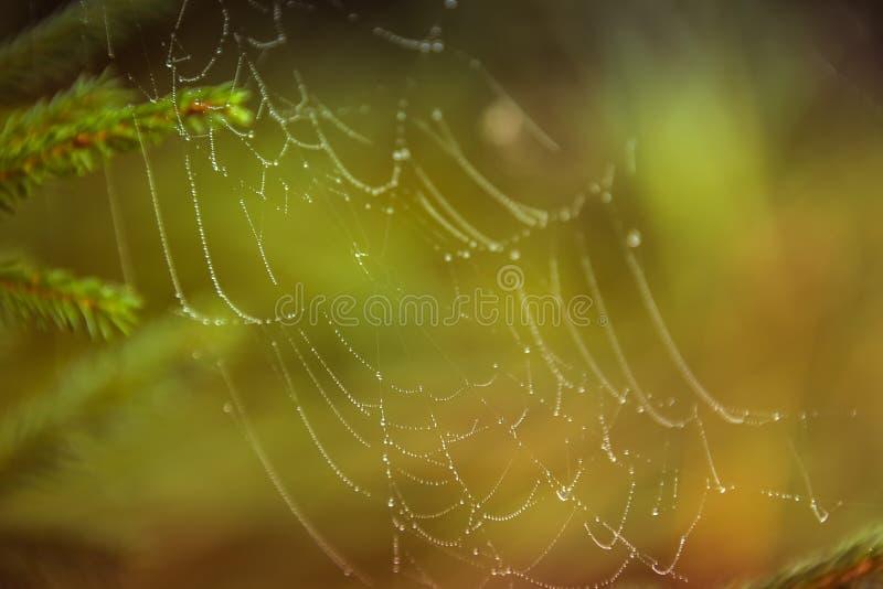 Gotas de água em uma Web de aranha na natureza fotos de stock royalty free