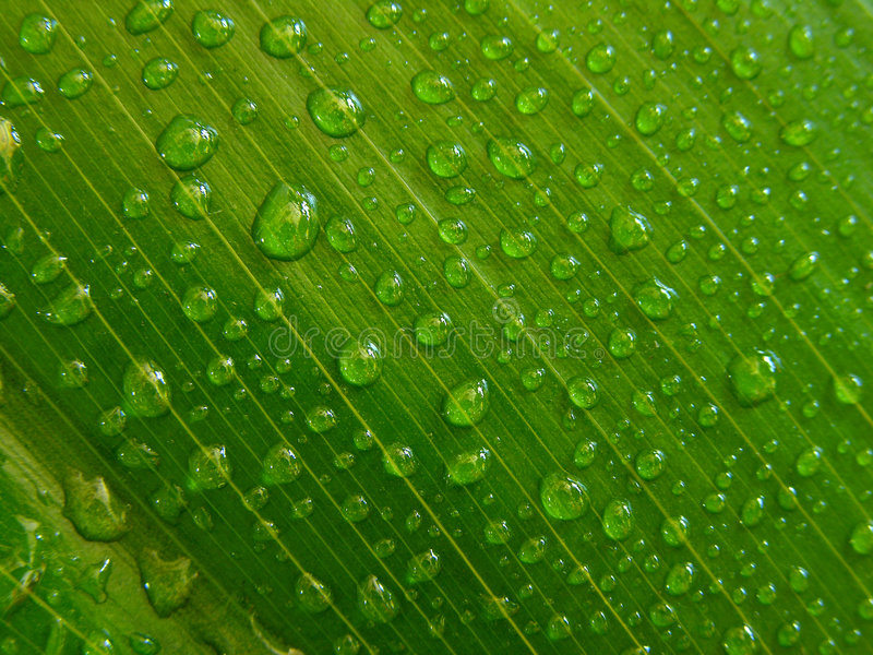 Download Gotas de água, folha verde imagem de stock. Imagem de manhã - 534165