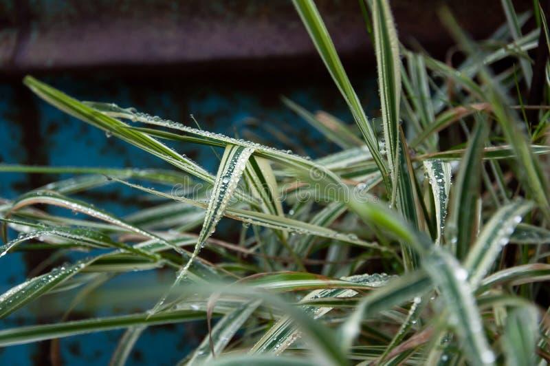 Gotas de água nas folhas verdes e do branco fotos de stock royalty free