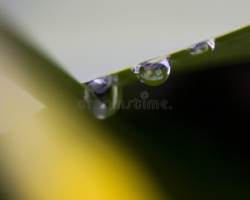 Gotas de agua del resorte imagenes de archivo