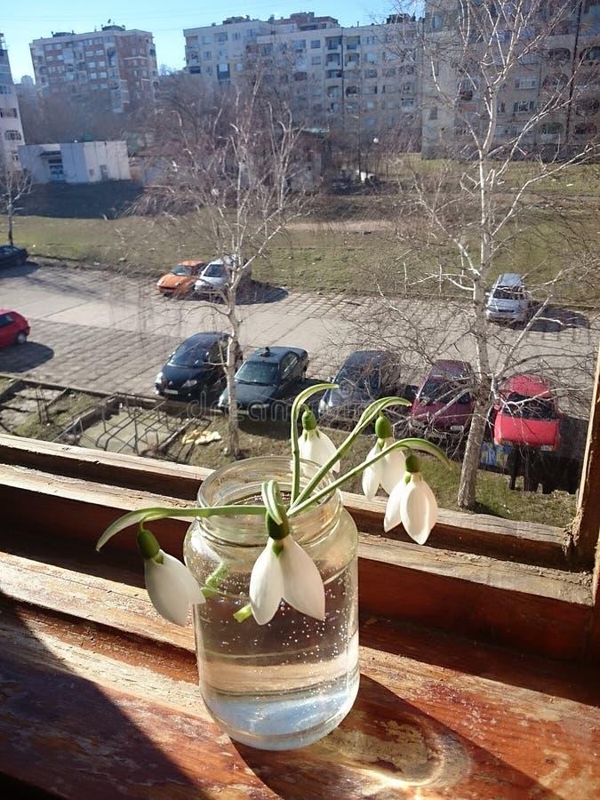 Gotas de agua en el gato de la opinión de la ventana fotos de archivo