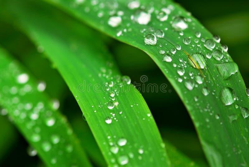 Gotas de agua en hierba fotografía de archivo