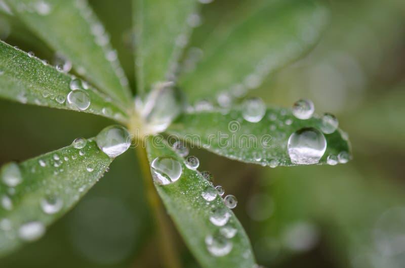 Gotas de agua en las hojas del verde fotos de archivo