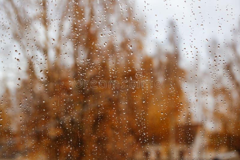 Gotas de agua sobre el vidrio contra un fondo de árboles amarillos fotografía de archivo libre de regalías